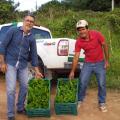 Emater inicia entrega de 200 mudas de maracujá em quatro municípios
