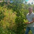 Próxima safra de laranja lima deve concluir colheita de 256 milhões de frutos em AL