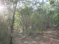 Caminhos dentro da Caatinga no morro do Craunã
