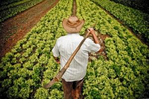 Agricultores atingidos pela seca serão beneficiados (Foto: Emater / Arquivo)
