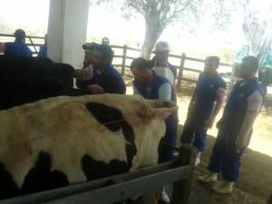 Iniciativa contribui para o desenvolvimento profissional do produtor rural (Foto: Divulgação)